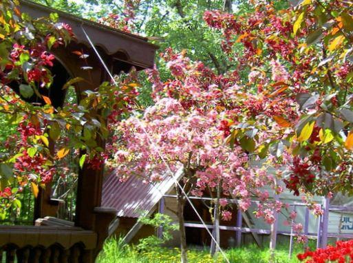 gartenblumen apfel zier malus foto rosa. Black Bedroom Furniture Sets. Home Design Ideas